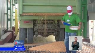 Nueva planta de secado de granos en Cuba