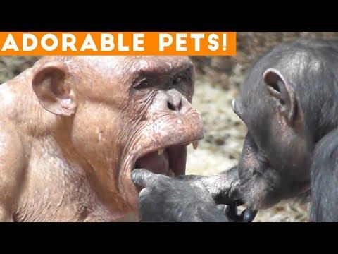 Cutest Adorable Pets Compilation July 2018