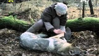 Bajki i Kresk�wki - Wied�min 1 Dzieci�stwo