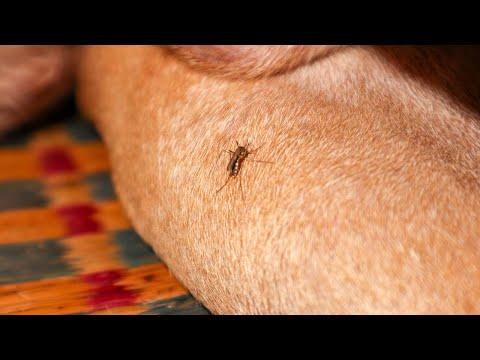 How To Make Homemade Bug Spray for Dogs