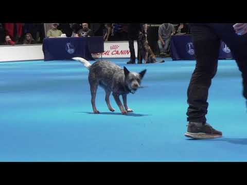 MyDOG 2019 - Nordens största hundevenemang