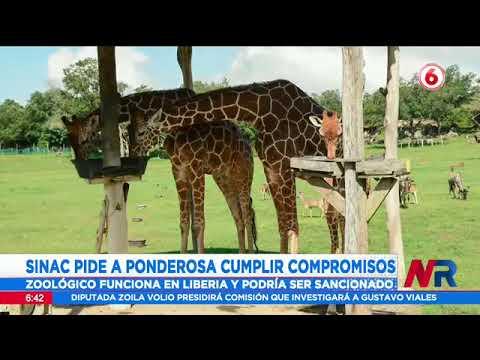 SINAC pide a zoológico Ponderosa Park Adventure cumplir compromisos