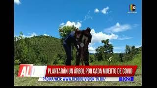 Brasil: Plantarán un árbol por cada víctima de COVID-19
