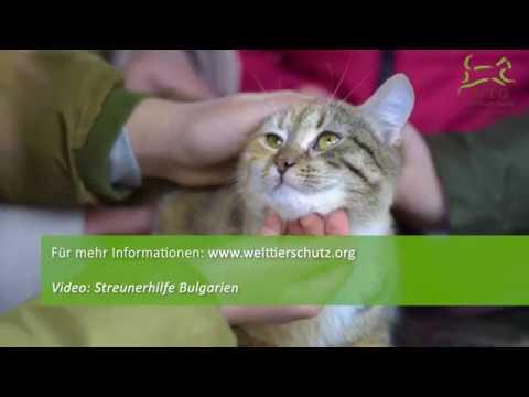 Hoffnung für Bulgariens Straßenkatzen