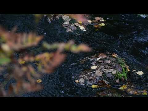 Videoexempel Nikon D3400