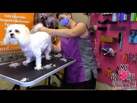 DOG GROOMING Zuchon - Be an Inspiration, Be Better, Be Kind, BE - Email Read Out