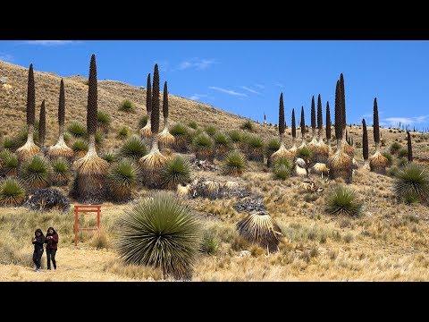 Huascaran National Park, Peru in 4K Ultra HD