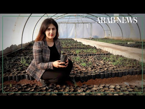 Oak trees take root in Iraqi Kurdistan to help climate