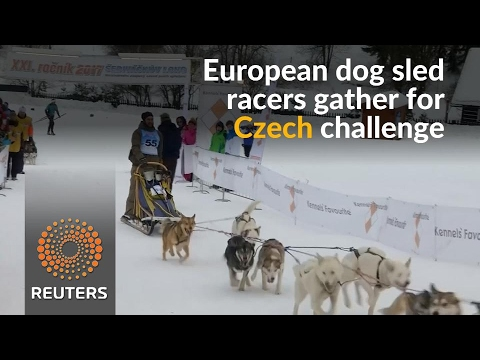 Testing four days of endurance, Czech dog sled challenge is no mean feat