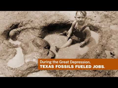 Discovering Texas Fossils