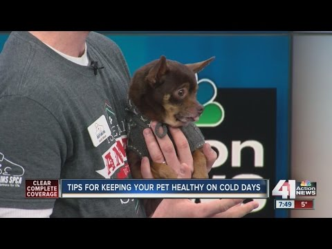 Tips for keeping your pet healthy on cold days