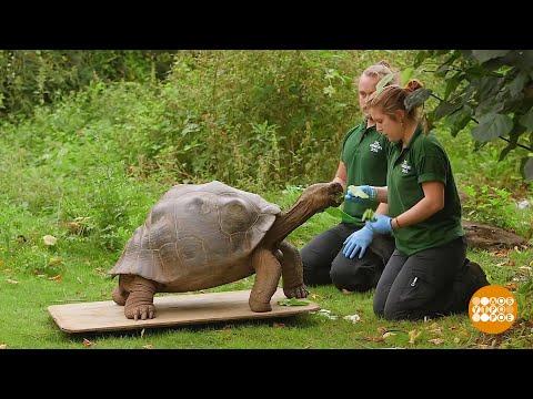 В мире. Новый дом для гигантских черепах. Возвращение туристов на Кубу. 26.10.2021
