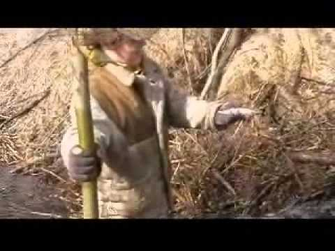 Video: Skelbiam mūši Bebrams!! -