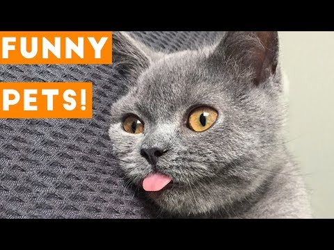 Funniest Pets & Animals of the Week Compilation May 2018   Hilarious Try Not to Laugh Animals Fail