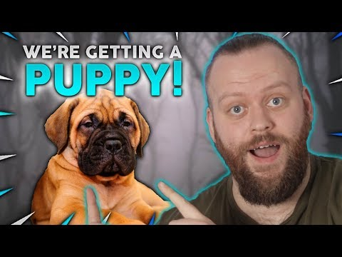 We're Getting A NEW PUPPY!! Fenrir Canine Podcast #1