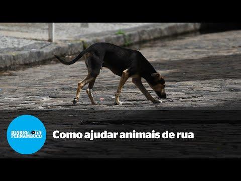 Projeto Tigela Cheia busca alimentar animais de rua durante período de isolamento