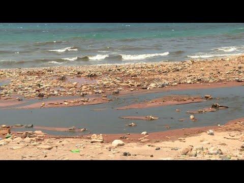 دراسة لبنانية تؤكد إمكانية السباحة على الشاطئ اللبناني