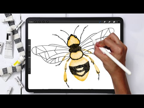 Digital Watercolor! Paint a Honey Bee in Procreate