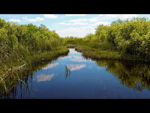 Everglades National Park, Florida, USA in 4K Ultra HD