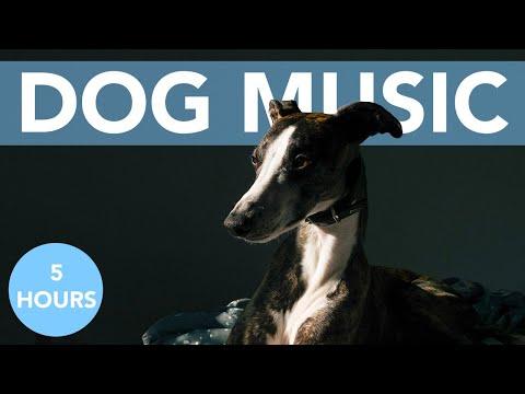 Relaxing ASMR Music for Dogs!