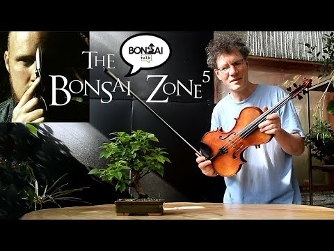 The Bonsai Zone, Questions and Answers and More!  Part 1, Feb 2018
