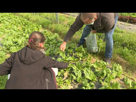 French take up fruit picking to ease lockdown frustrations | AFP photo