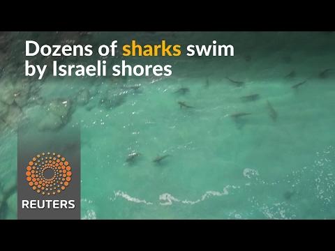 In unique phenomenon, sharks swarm the Med
