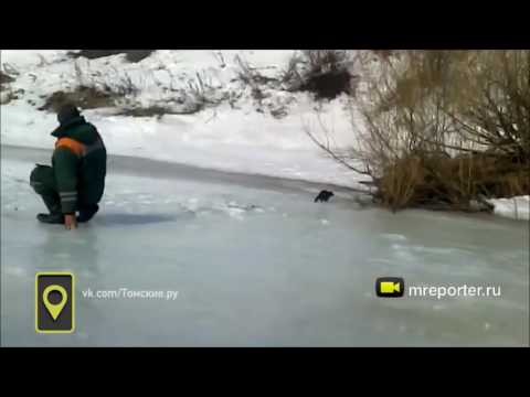 Норка ворует улов у рыбаков в Томской области
