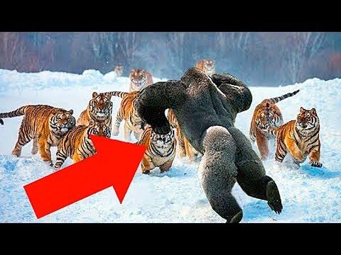 6 Самых Бесстрашных Животных