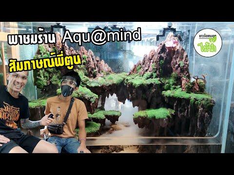 พาชมร้านไม้น้ำ-ร้าน-AquaMind-(