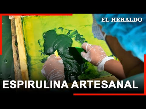 Notas EH | Espirulina, el 'oro verde' que se cultiva en Galapa