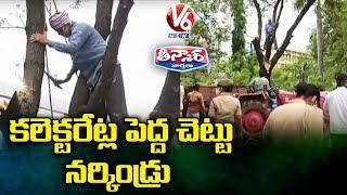 కలెక్టరేట్ల పెద్ద చెట్టు నర్కిండ్రు : Tree Felling In Karimnagar Collectorate | V6 Teenmaar News - V6NEWSTELUGU