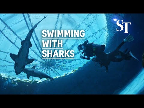 Dive with over a hundred sharks at S.E.A Aquarium