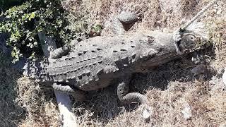 NEPA Calls For Public To Identify Men In The Crocodile Killing Videos | News  | CVMTV