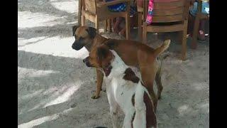 Abandonados y maltratados, así deambulan centenares de perros en San Andrés