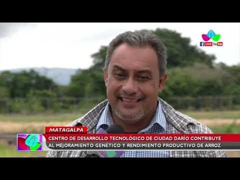 Centro de Desarrollo Tecnológico de Ciudad Darío contribuye al mejoramiento genético del arroz