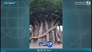 أغرب شجرة في العالم