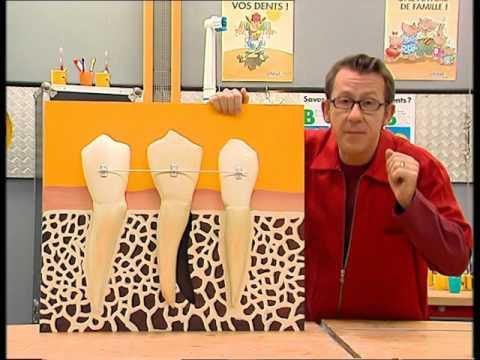 Comment rectifie-t-on l'alignement des dents ? - C'est pas sorcier