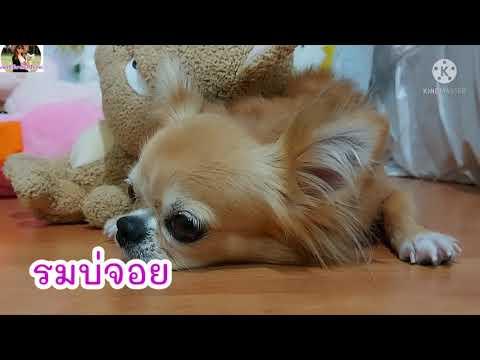 หมาหน้างอ...ง่วงนอนจร้า-มีอาร์