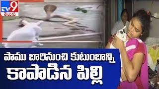 కింగ్ కోబ్రాతో పిల్లి ఢీ : Odisha - TV9 - TV9