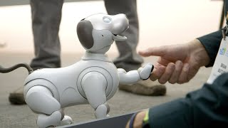 Sony's new Aibo is a very good robot dog
