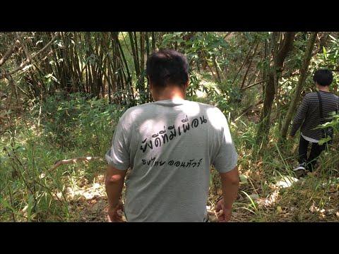 เข้าป่าหาหน่อไม้ในไต้หวันครับ