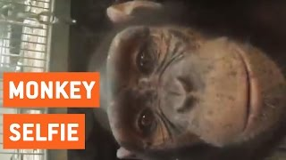 Monkey Steals GoPro and Takes Selfie