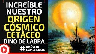 INÉDITO I El agua y nuestro ORIGEN CÓSMICO Cetáceo: DINO DE LABRA
