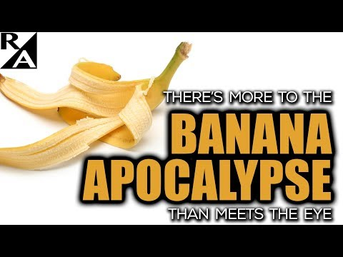 Right Angle - There's More To The Banana Apocalypse Than Meets The Eye - 09/08/17