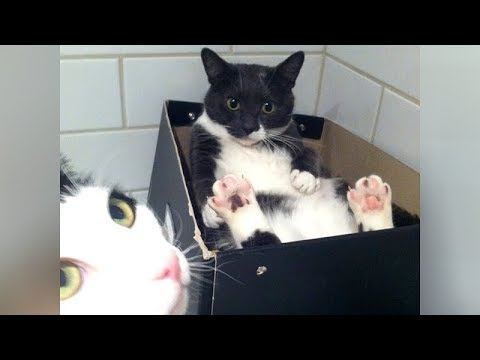 NO WAY you can WATCH  & NOT LAUGH! - Super FUNNY CATS