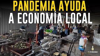 El cese de invasión de mercado por pandemia, dejo grandes ventas a la zona piñera de Oaxaca.