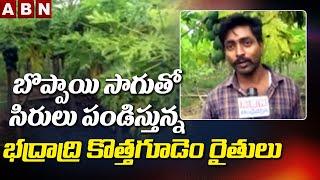 Bhadradri Kothagudem Farmers Papaya Cultivation Success Story || ABN Telugu - ABNTELUGUTV