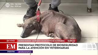 Edición Mediodía: Presentan protocolo de bioseguridad para la atención en veterinarias