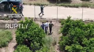 Spain: Drone footage captures police chasing narco in orange grove in Seville